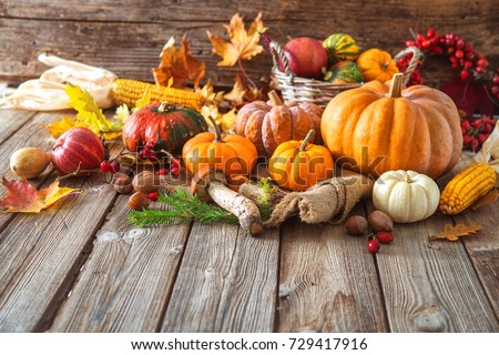 Autumn still life with pumpkins, corncobs, fruits and leaves on wooden background