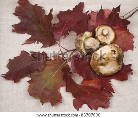 Autumn still-life with red leaves and mushrooms