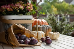 Autumn still life with seasonal fruits, vegetables and flowers. Colorful pumpkins and ripe plums.