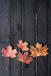 Autumn still-life. Yellow and red maple leaves on black burned boards copyspace above view