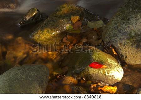 autumn stream close up