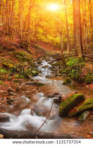 autumn stream in the forest, gold autumn European landscape, wallpaper landscape background