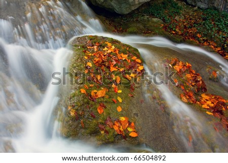 Autumn stream with stone covered leafage