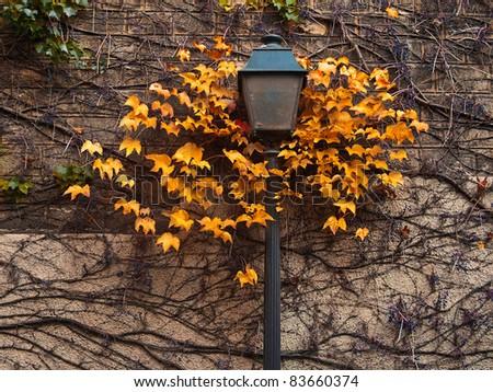 Autumn Street Lamp. Paris. Montmartre. - stock photo