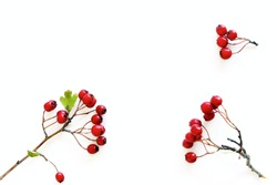Autumn style botanical arrangement. Composition from the fruits of the red hawthorn berries on white table background. Fall decorative concept, flat lay.
