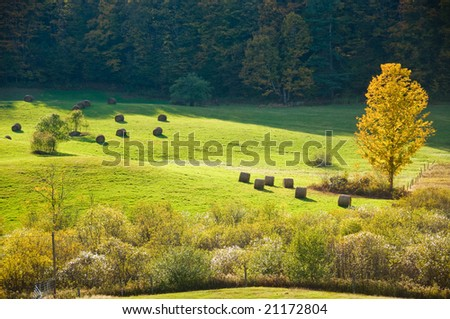 Autumn sunlight striking a yellow tree in a green field