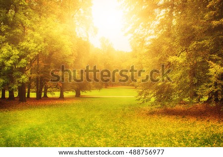 Autumn sunny park with orange trees and meadow , natural seasonal background - Shutterstock ID 488756977