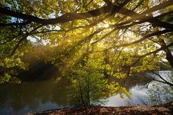 Autumn sunrays in Moscow park