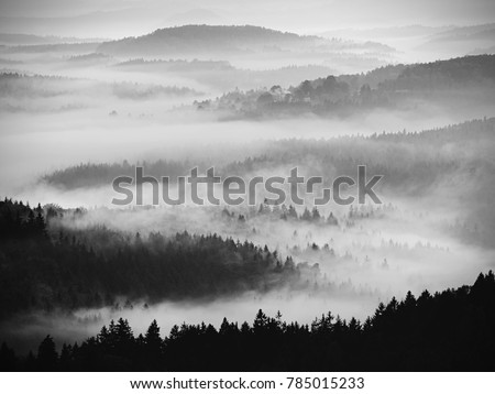 Autumn sunrise. Deep forest in a beautiful hilly landscape within inversion weather. Treetops  increased from foggy background. Vivid effect. #785015233
