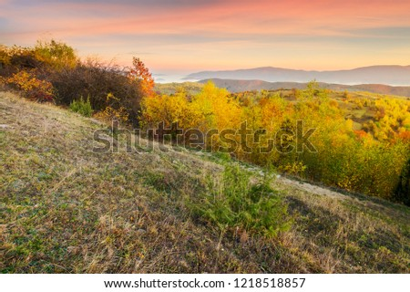 autumn sunrise in mountains. weathered grass and trees in fall foliage. valley of fog and mountain ridge in the distance. sky with blurred reddish clouds #1218518857