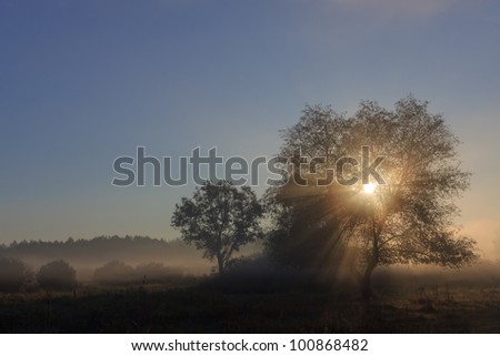 Autumn sunrise on the river bank. Foggy morning