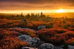 Autumn sunset, Dolly Sods Wilderness, West Virginia