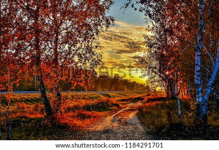 Autumn sunset forest road landscape. Sunset sky clouds above autumn forest road. Sunset autumn forest road view. Autumn sunset forest road #1184291701