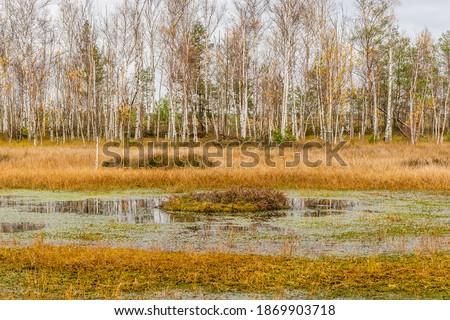 Autumn Swamp Landscape. Small Lake with Swamp Islands. Yelnya National Park, Belarus