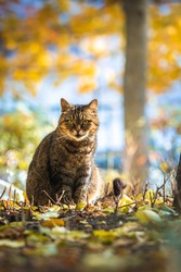 Autumn tabby cat in the forest with a beautiful background