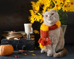 Autumn Thanksgiving composition. Cute cat in knitted scarf, pumpkins, autumn leaves, hot latte mug and open book. Autumn mood, vibes. Hugge concept. Side view