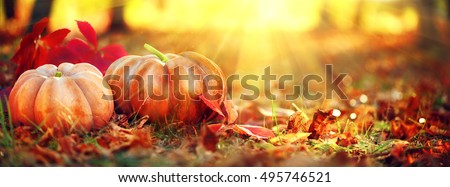 Autumn Thanksgiving day background. Halloween Pumpkins, patch. Beauty Holiday autumn festival concept. Fall scene. Orange pumpkin over beauty bright autumnal nature background. Harvest #495746521