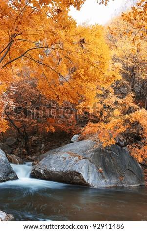 autumn the wild forest