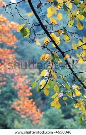 autumn theme