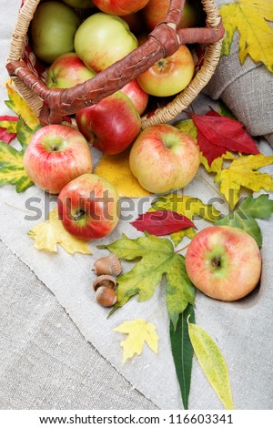 Autumn theme. Apples and walnuts on linen canvas.