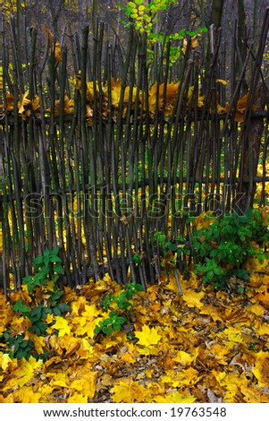 Autumn theme. Fence and yellow leaves.