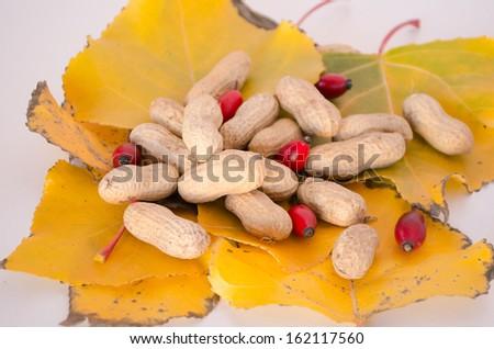 Autumn theme-Peanuts on leaves