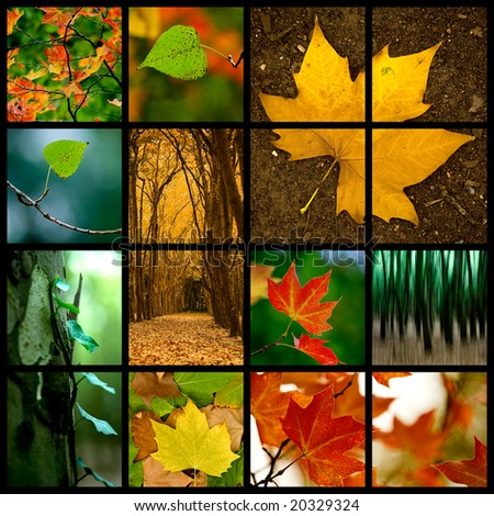 Autumn themed collage - Beautiful colored fall pictures