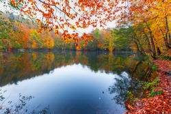 Autumn time and fall colors. Colorful tree leaves fallen from tree branches. Very beautiful lake. ( Yedigöller). Yedigoller National Park, Bolu, Istanbul. Turkey.
