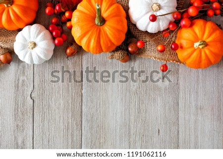 Autumn top border of orange and white pumpkins and berries on a light gray wood background with copy space