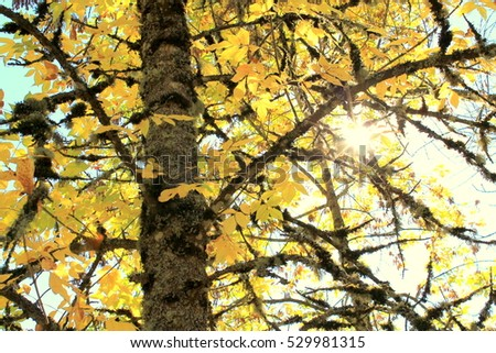 Autumn Tree #529981315