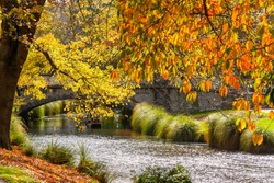 Autumn tree and river at Christchurch, South Island, New Zealand.