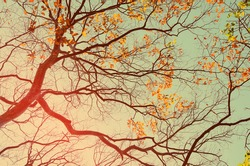 Autumn tree branch abstract background.Retro color style.