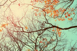Autumn tree branch background.Retro color style.