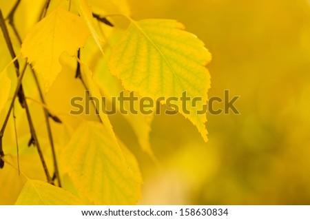Autumn tree branch, natural seasonal background