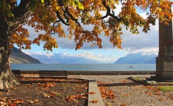 Autumn tree canopy looking out over lake and mountains in Cully, Switzerland. Autumn leaves falling on floor. Oranges and blues. Bench looking out over the lake.