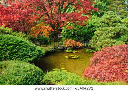 Autumn tree colors in japanese garden of butchart gardens, victoria, british columbia, canada