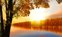 Autumn tree near the river.Natural scenery. Beautiful autumn landscape with yellow trees. Fall foliage in colorful  forest. Falling leaves natural background