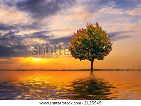 Autumn tree on a background of a beautiful decline
