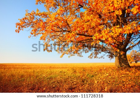 Autumn tree on dry meadow over blue sky background