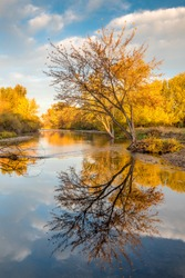 Autumn tree reflection in Boise River in Idaho