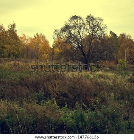 autumn tree vintage background