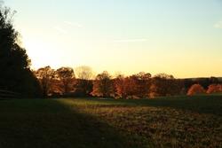 autumn treelin