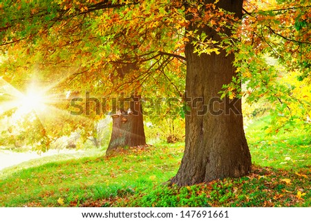 Autumn trees #147691661