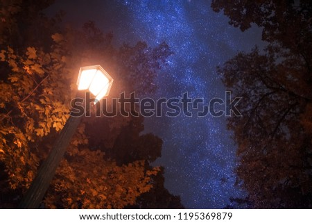 autumn trees against the night sky. #1195369879