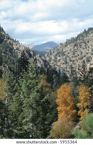 Autumn trees and pines with mountain peak background