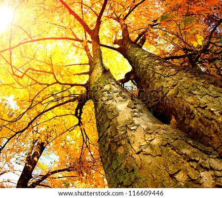 Autumn Trees.Fall