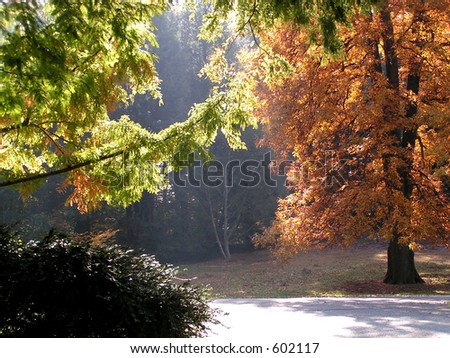 Autumn Trees in Glowing Light