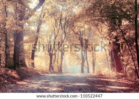 autumn trees in sunbeams  an...