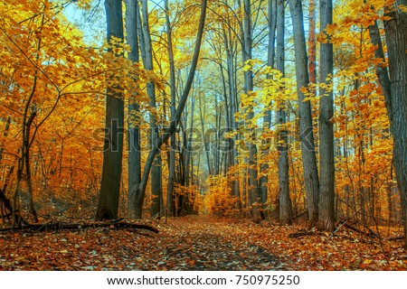 autumn trees in the forest - Shutterstock ID 750975250