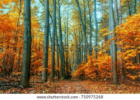 autumn trees in the forest - Shutterstock ID 750975268
